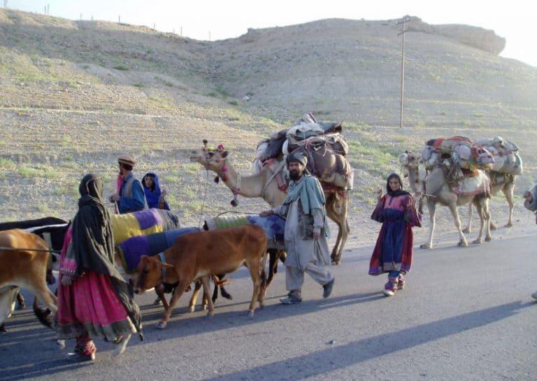 Afghan Kuchi Nomads